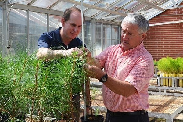 Scott Enebak and Ryan Nadel measure the height of loblolly pine seedlings